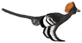 Anchiornis awesome