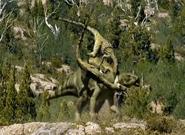 Utahraptorshunting