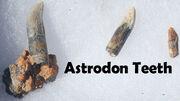 Astroden