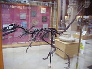 Bambiraptor 2