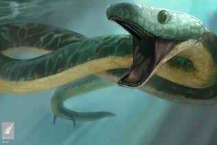 Kaca pachyrhachis snake