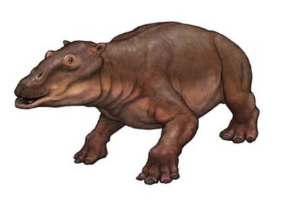 Paleoparadoxia