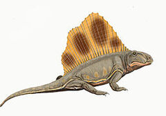 Dimetrodon loomisi by ДиБгд.jpg