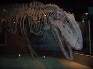 Giganotosauro di Arezzo