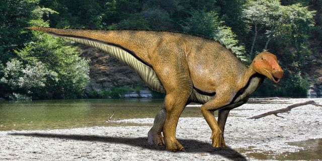 File:Koshisaurus NT.jpg