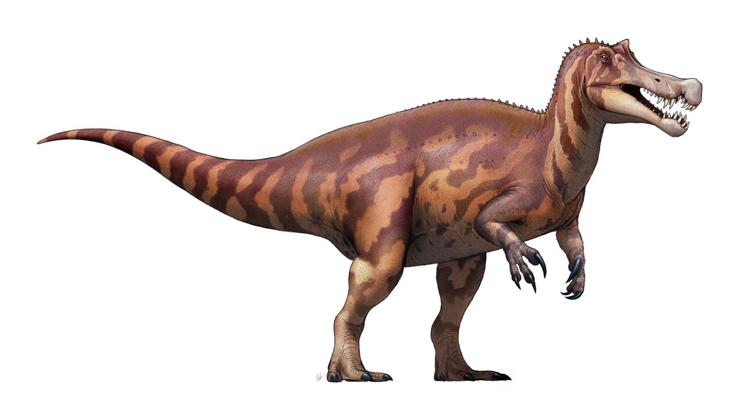 Irritator | Dinopedia | Fandom powered by Wikia