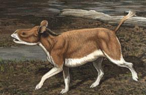 Hyracodon Buell