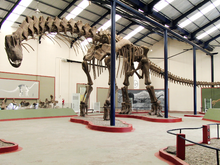 220px-Argentinosaurus skeleton, PLoS ONE