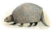 Propalaehoplophorus