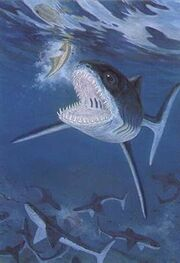 Cladoselache&fish