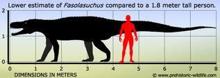 Fasolasuchus size