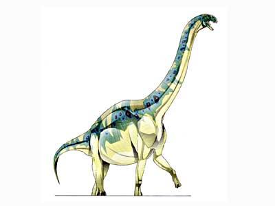 Tienshanosaurus-1
