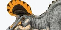 Lambeosaurus/Gallery