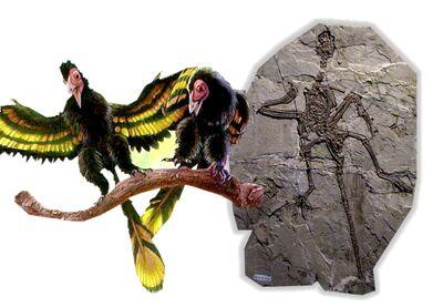 Jixiangornis
