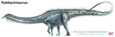 Rebbachisaurus02