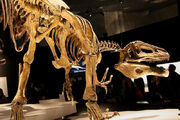 800px-Megaraptor