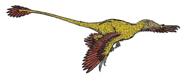File:Microraptor 575 AL.JPG