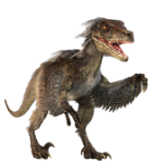 Velociraptor infobox