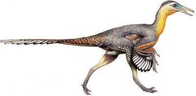 Buitreraptor-dinosaurs-28667916-796-392