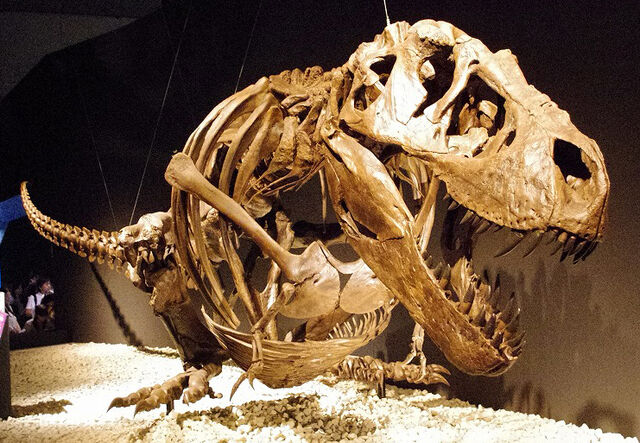 File:T-Rex-Hunter-Was-actually-a-Cannibal.jpg