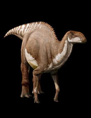 Brachylophosaurus illustration