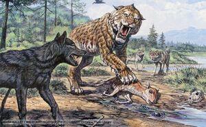 Dire wolf 1