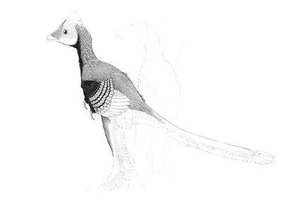 Gobipteryx