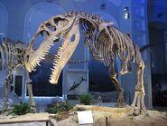 FI giganotosaurus
