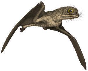File:Anurognathus.jpg