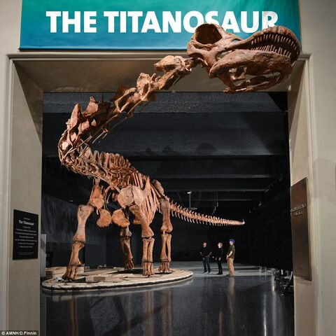 File:302BF8A400000578-3399972-The biggest dinosaur ever to be shown at the American Museum of -a-14 1452803993902.jpg