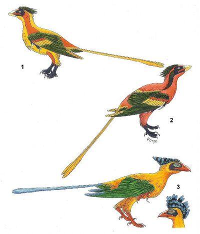 Jinzhouornis