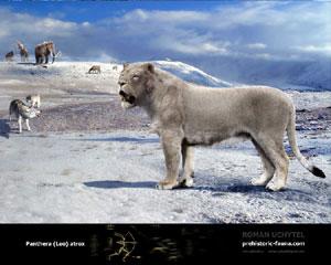 American Lion | Dinopedia | Fandom powered by Wikia
