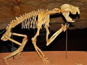 8680744-skeleton-of-a-marsupial-lion-in-a-cave