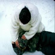 Polarbear8