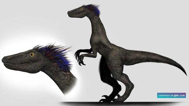 File:Raptor Royal Standing.jpg