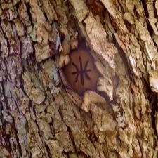 File:Tree mark.jpg