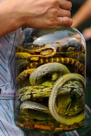 File:Snake-wine.jpg