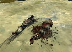 Bodies1