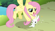 File:180px-Fluttershy and dizzy Angel S03E10.png
