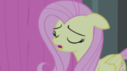 File:180px-Fluttershy scatting S4E14.png