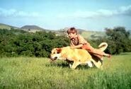 Old Yeller dog