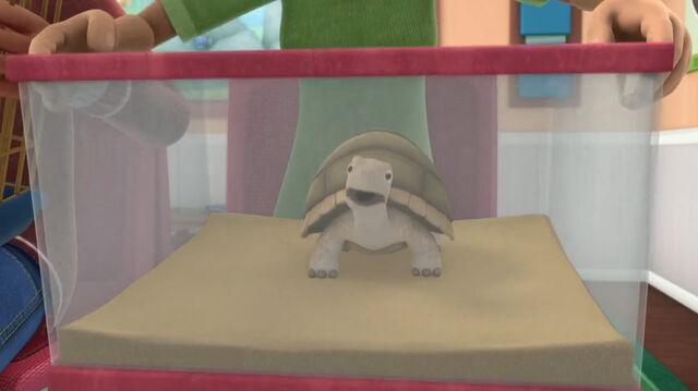 File:Turtle doc mcstuffins.jpg