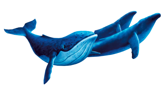 File:Whalespic.png
