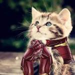 File:Kittensrockk.jpg