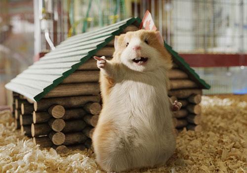 File:Bucky the Hamster.jpg