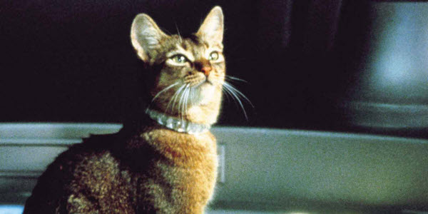 File:The Cat From Outer Space 1.jpg