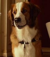 Oscar (Beverly Hills Chihuahua)