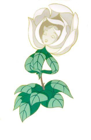 File:White rose cel blog.jpg