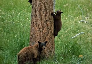File:Bear country.jpg