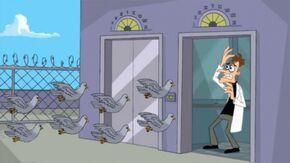 Pigeons Doof.jpg